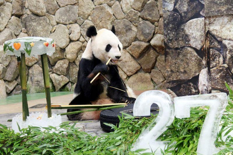 父さんパンダ 永明 27歳 白浜のアドベンチャーワールド 紀伊民報agara